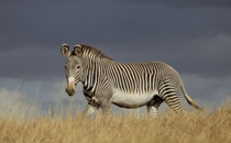 Lewa-Wildlife-Conservancy