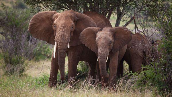 loisaba-tented-camp-wildlife-elephant-family-c-silverless5D7BA46A-B993-DB35-A3F6-22A1F1A56F9F.jpg
