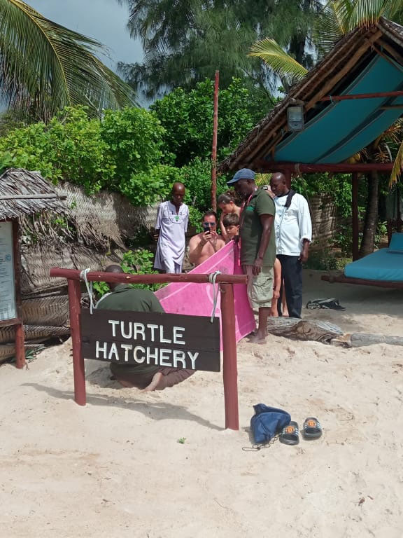 8-Turtle-Hatchery-Season-II