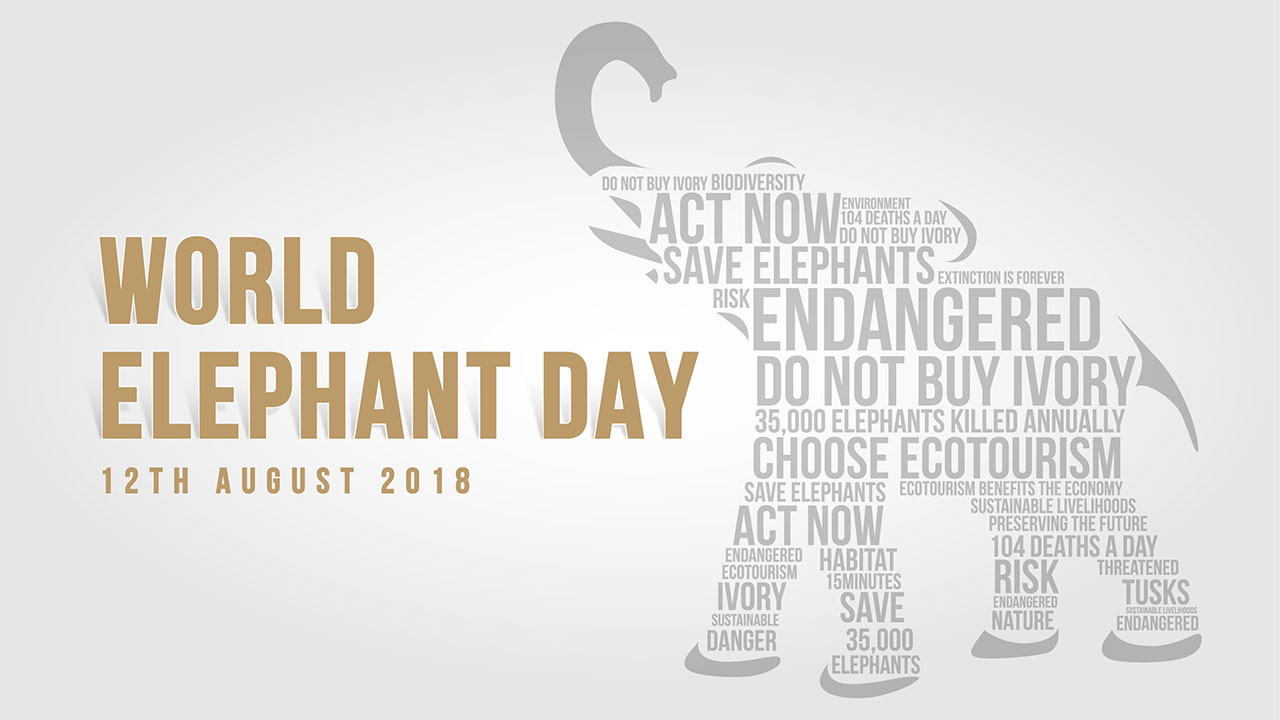 world-elephant-day-02