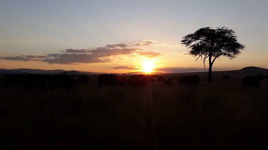 Taken by Godfrey Polonet Kinyaga in Lewa Wildlife Conservancy Sunset