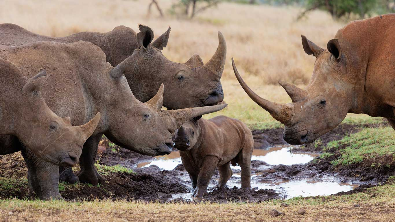 Celebrating 17 Rhino Births and Zero poaching