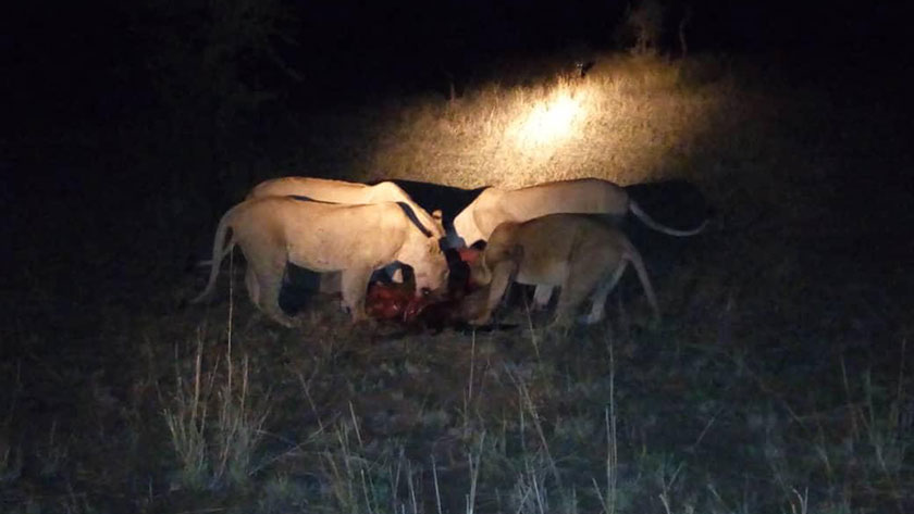 Night Game drive TTT EC Guide Baraka